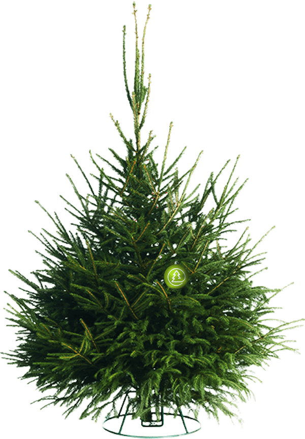 Русская елка