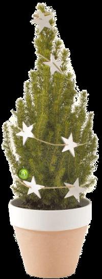 Подарочная елка (h-50 cм)