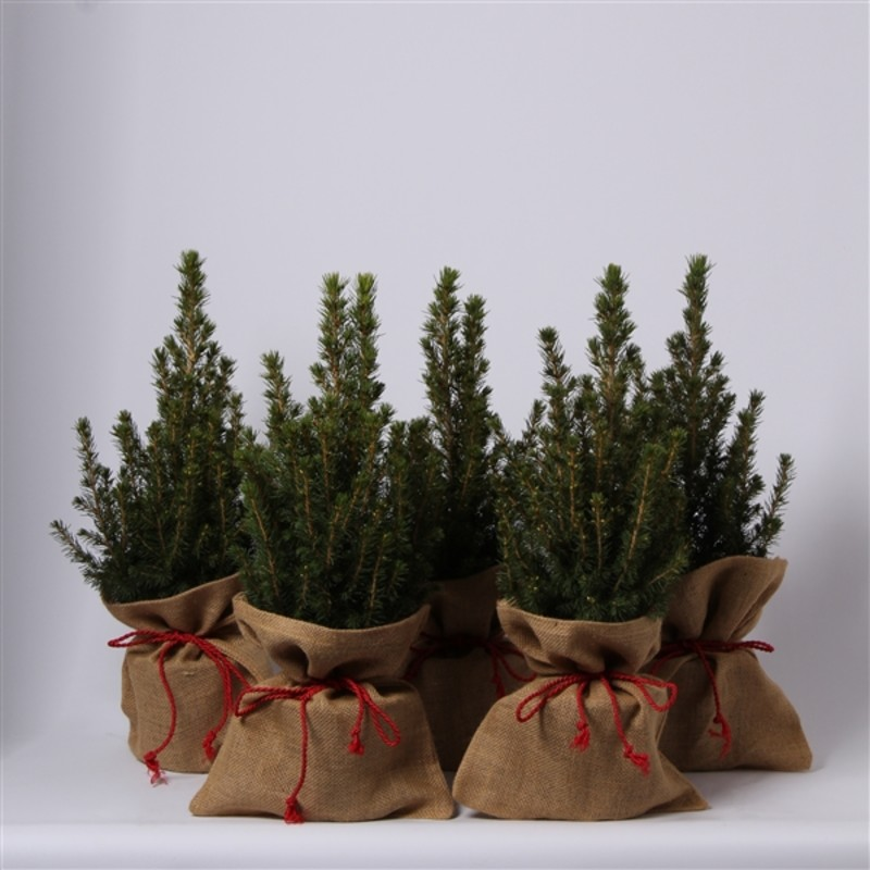 Подарочная елка(40 см)